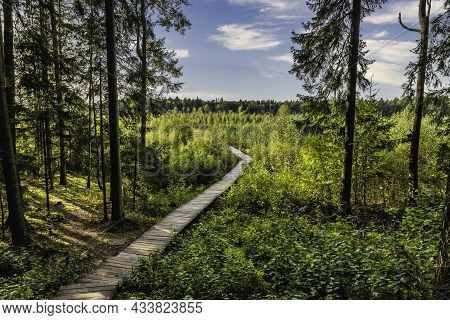 Boardwalk Hiking Trail Through The Wooded Marsh