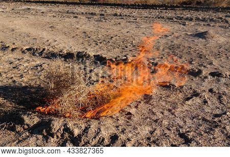 Burning Tumbleweed At Aralcum Desert As A Bed Of Former Aral Sea, Karakalpakstan, Uzbekistan