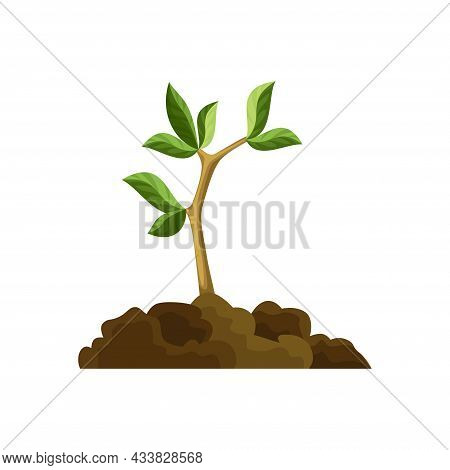 Stage Of Tree Growth. Small Tree Growth With Green Leaf And Branches. Green Sprout Broke Through The