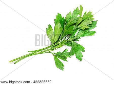Parsley Herb Isolated On A White Background. Fresh Parsley Macro. Top View
