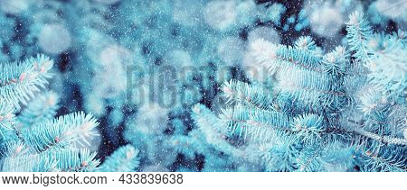 Christmas background, Christmas card, snowy Christmas tree, frosty Christmas tree branches. Winter background, winter fir tree branches covered with snow, winter trees under falling snow, free space for New Year and Christmas text