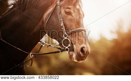 Portrait Of A Beautiful Bay Horse With A Bridle On Its Muzzle, Which Gallops Quickly On A Sunny Even