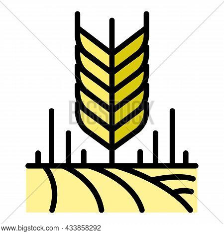 Wheat Grains Icon. Outline Wheat Grains Vector Icon Color Flat Isolated