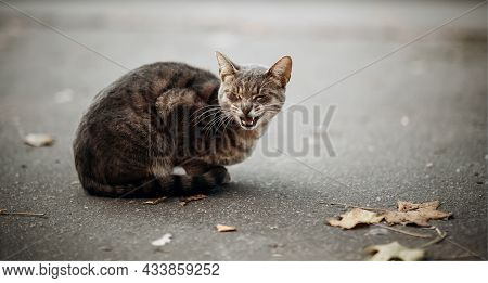 Portrait Of A Striped Meowing Cat In Autumn. Homeless Street The Cat Is Sitting On The Asphalt Next