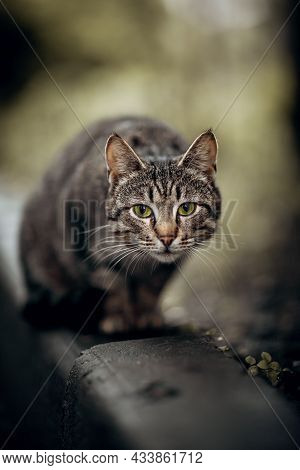 Portrait Of A Cat In Nature.homeless Street Cat Sit On The Curb In The Fall.  A Lost Cat With A Stri