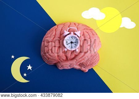 The Circadian Rhythms Are Controlled By Circadian Clocks Or Biological Clock