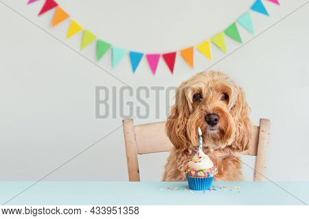 Cute dog celebrating with birthday cupcake and bunting