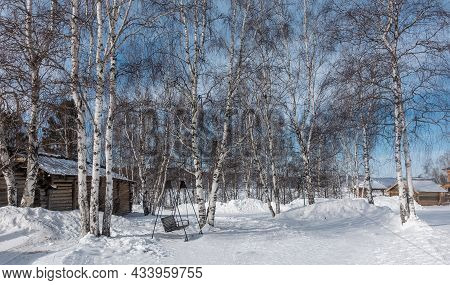 Winter Birch Grove. Trunks And Bare Branches Against The Blue Sky. Among The Snowdrifts There Is A W