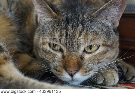 Isolated Green Eyed Cat Lying And Staring