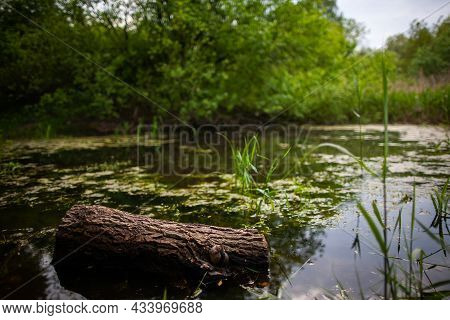 Tree Trunk In Shallow Water With Reeds, Bushes And Trees In The Background   Close Up Photo Of A Pie