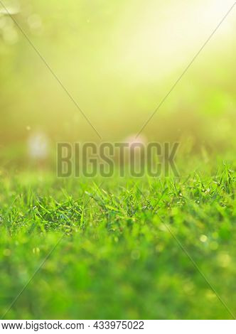 Blurred Green Grass On Green Background With Soft Focus And Copy Space, Eco Concept