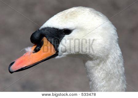 Bird Profile