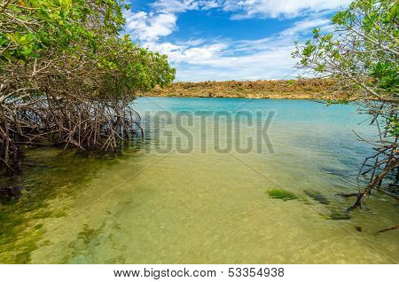 Sea And Mangrove View
