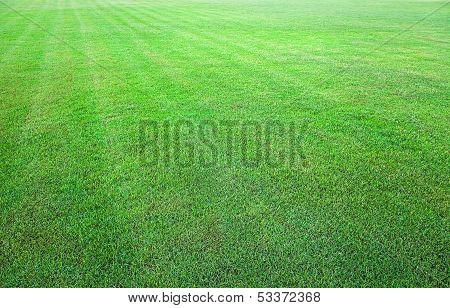 Fresh Green Grass Field Background Texture