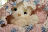 stuffed toy kitten wrapped in a home-made crochet blanket poster