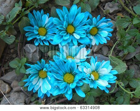 Alphabet Letter I in Blue Flowers