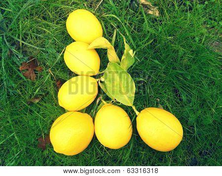 Alphabet Letter L Lemons