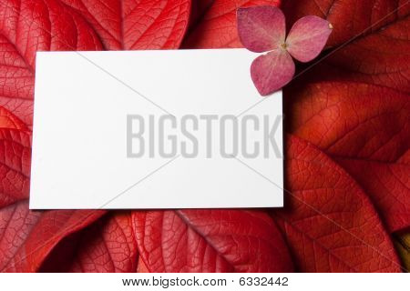 Red Leaves And Card