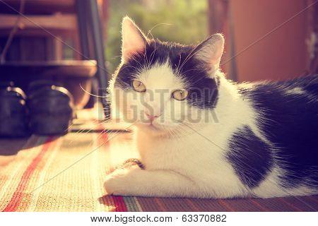 Cute Cat Lying on Carpet at Sunset