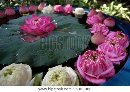 Circle of Lotus