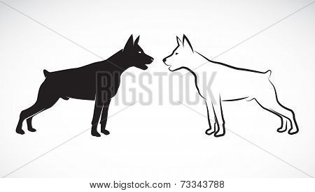 Vector image of an dog (Great Dane) on white background poster