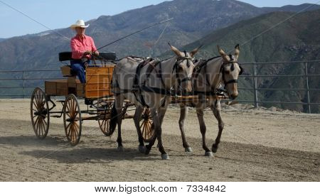 Woman Driving A Pair Of Mules