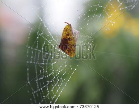 Leaf In Net