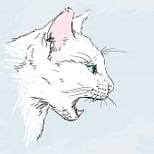 Evil white pussy cat sketch, Hand drawn illustration poster