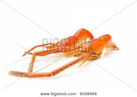 Big Shrimp aka Pitu on white background . poster