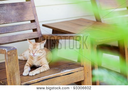 Cat On The Arm Chair