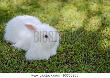 White Furry Bunny