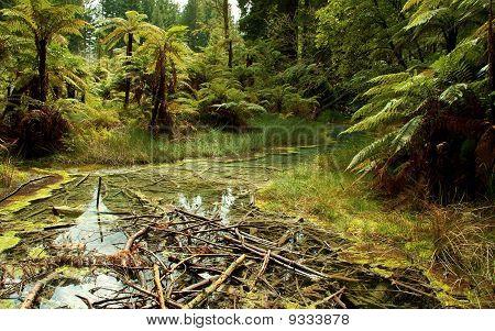 Watery Grove in Whakarewarewa Forest