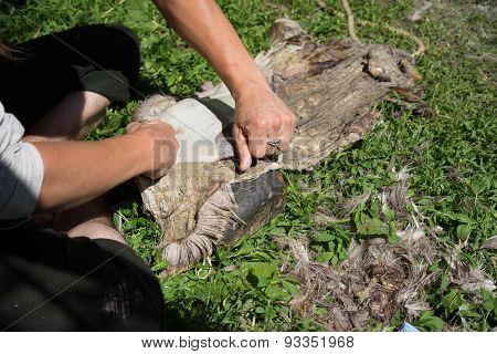 Carving Animal Fur