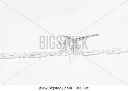 Dragonfly Pencil Sketch