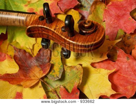 Violin Scroll Detail In  Autumn