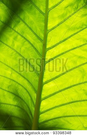 Leaf In Thailand
