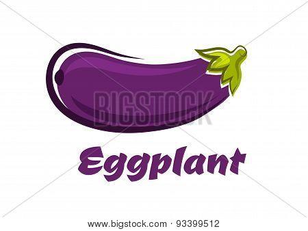 Fresh dark violet eggplant vegetable