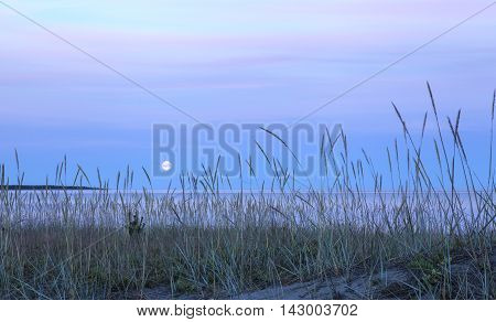 Close-up on Lyme grass on the sandy seashore. Beach, sea, moon and clouds in the background. Nightfall.