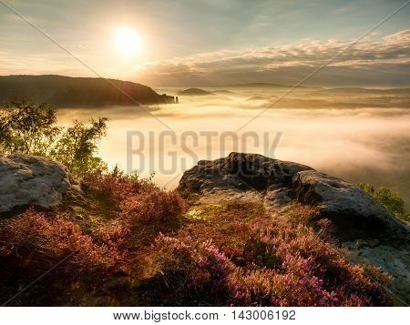View Into Deep Misty Valley Over Tufts Of Heather. Hill Peaks In  Creamy Fog