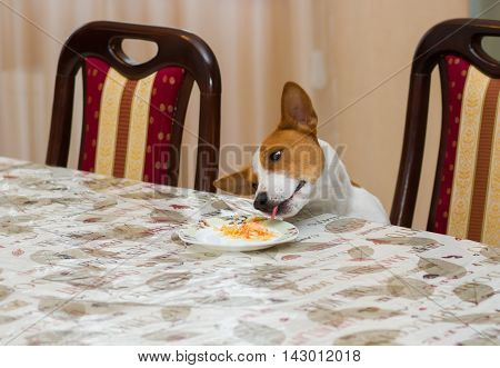 Hungry dog steals food while beings home alone .