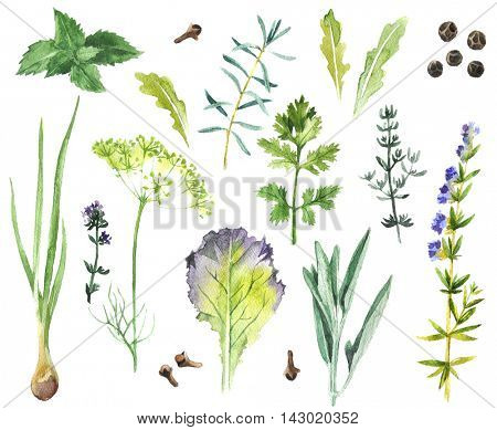 Watercolor collection of hand drawn herbs and spices