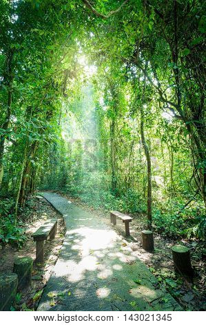 Walkway and seat inside tropical forest surrounded by green tree which sunlight shining through small hole of tree.