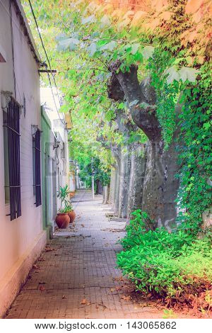 COLONIA DEL SACRAMENTO, URUGUAY - MAY 04, 2016: old ancient street with some trees at the sidewalk and some typical colonial houses.