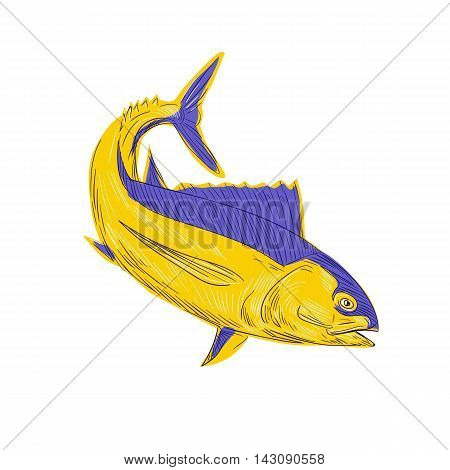 Drawing sketch style illustration of albacore tuna fish also known as albacore fishalbicore albie pigfish tombo ahi binnaga Pacific albacore bonito del Norte German bonito longfin longfin tuna and longfin tunny viewed from the side set on isolated white b poster