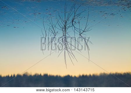 Branch And Reflection In Water