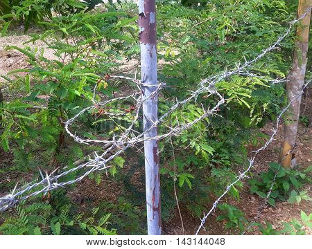 top strand of three-strand rusty tangled barbed wire fence, wrapped around a metal post with peeling paint, running on to be stapled to a homemade wooden post, beside some brush, Songkhla, Thailand