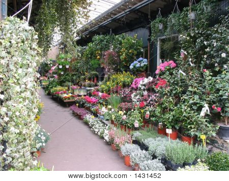 Paris Flower Market