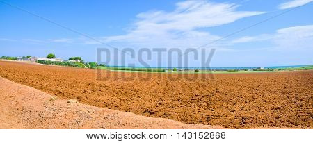 cultivated field of typical red soil of Apulia or