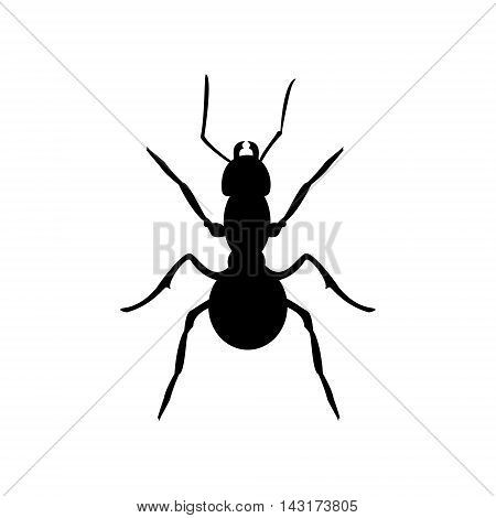 Vector illustration insect anatomy. Formica exsecta. Ant black silhouette isolated on white background