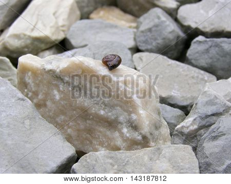 Snail hid in a shell lies on the stones